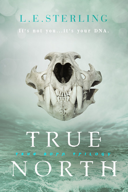 cover of true north (novel)